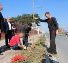 Në Gjilan fillon mbjellja e rreth 7 mijë drunjve dekorativ